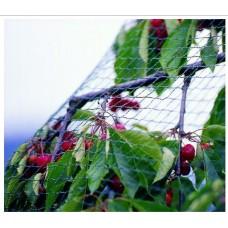 Δίχτυ Προστασίας (Bird Net)